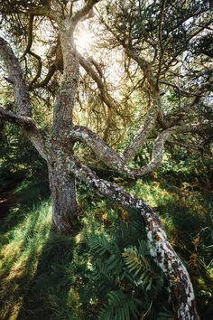 Dunvegan Castle - Tree - Isle of Skye - Scotland © Andrea Livieri #andrealivieri #livieri #dunvegancastle #skye #isleofskye #scozia #scotland #travel #viaggio #paesaggi #paesaggio #canon #canon6d #6d #fullframe #tramonto #colori #natura #sole #estate #summer #nuvole #photography #fotografia #landscapes #landscape #manfrotto #benro #outdoorphotography #outdoor #tree #dunvegan #castle