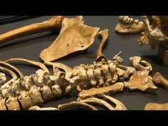 Videos About  Forensic anthropology