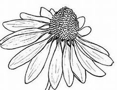 black and white flower drawings - Bing images