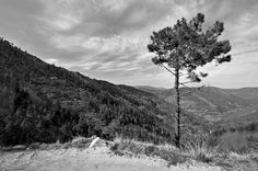 Tree: Tree Image by psychohh Close to Manteigas, Portugal The post Tree appeared first on BookCheapTravels.com. #landscape_photos #tree