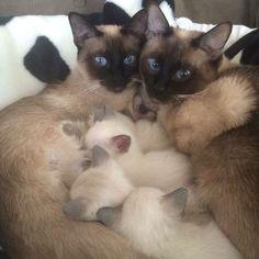 30-chattes-fieres-de-leurs-chatons-24
