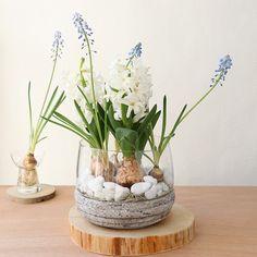 お花や香りを楽しめるヒヤシンスの水栽培。咲き終わったあと、お庭や鉢に植え替えると、毎年楽しむことができますよ。しかも、ほったらかしでOK。大切に育てたヒヤシンスを、毎年楽しんで下さい。 Bulbous Plants, Edible Garden, Diy And Crafts, Glass Vase, Seasons, Creative, Green, Holiday, Flowers