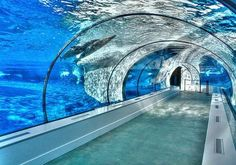 glassy tunnel, under water, sea, transparent, fish, nice view