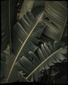 By Water by c___l___o House of Water -Sara Leaves Wallpaper Iphone, Plant Aesthetic, Welcome To The Jungle, Wild Nature, Tropical Plants, Tropical Fabric, Aesthetic Pictures, Mother Nature, Planting Flowers