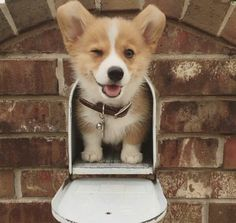 In our puppy gallery you will find incredibly cute Hu-In unserer Welpengalerie finden Sie unglaublich niedliche Hunde und Welpen! In our puppy gallery you will find incredibly cute dogs and puppies! Puppy Pictures, Dog Photos, Funny Photos, Corgi Dog, Dog Cat, Husky Puppy, Cute Corgi Puppy, Pomeranian Puppy, Cute Baby Animals