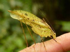 Amazing leaf-mimicking animals : TreeHugger ♥ | ©