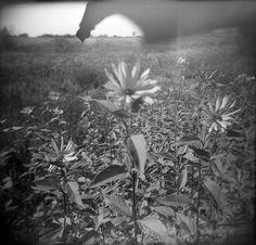 BW flowers
