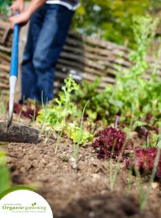 The key for organic gardening is to start with good soil. Keep your soil healthy by avoiding the use of pesticides, herbicides and chemical fertilizers. A great way to create natural healthy and nutrient rich organic soil is to start your own backyard compost.