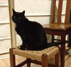 Hally Cat | Pawshake South melbourne