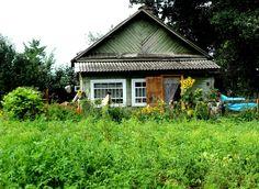 Dacha garden and house.