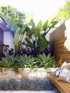Beginner's Guide To Tropical Landscaping Design Plans – My Best Rock Landscaping Ideas Patio Tropical, Tropical Garden Design, Tropical Landscaping, Landscape Design Plans, House Landscape, Tropical Flowers, Garden Inspiration, Outdoor Gardens, Plants