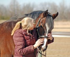 Run With Heart (4 yr old, 15.3hh gelding) available at our Marysville, OH facility.