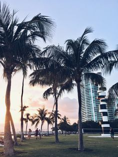 Miami's Best Spots – The Mitty Committee