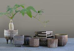 Maryam Riazi planters
