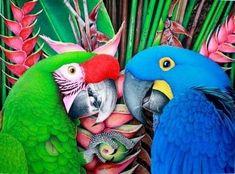 Somos taller colectivo en creación de arte para decorar. Wsp 3108143674 Kinds Of Birds, Parrot, Animals, Google, World, Stuff Stuff, Bird Pictures, Tropical Birds, Mixed Media Art