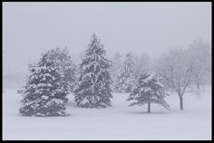 """Visual #BibleVerseoftheDay: Job 37:9b-10 with Trees Covered in Snow, Seymour Smith Park, Eastern Nebraska. """"And out of the north comes the cold…"""" CLICK THE PHOTO for the complete passage. http://visualverse.thecreationspeaks.com/the-north/"""