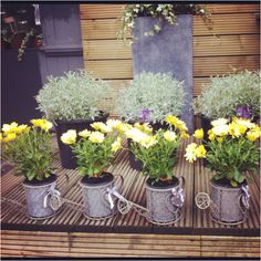 how cute is this?! watering can centerpieces!! tie with bright checked ribbon or loads of raffia...