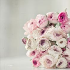 ranunculus are ridiculously beautiful!ranunculus are ridiculously beautiful! Ranunculus Wedding Bouquet, Wedding Bouquets, Wedding Flowers, White Ranunculus, White Roses, White Flowers, Pink White, Flower Power, My Flower