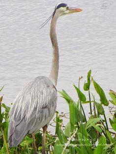 Ritch Grissom Memorial Wetlands