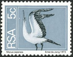 Cape Gannet (Morus capensis) Flora And Fauna, Postage Stamps, South Africa, Whale, African, Bird, Gallery, Graphics, Collections