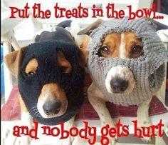 Dachs hounds