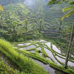 Top 10 Things To Do in Bali | Indonesia Travel Guide