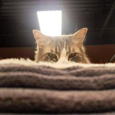 Cuando me di cuenta, ya me tenia marcado... 😅😅 #mascotaplanet #mascotas #gatos