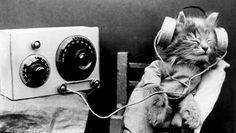 """Cats enjoy """"species appropriate"""" music, with purring, chirping and sliding tunes topping the kitty charts. Researchers tested what music cats like to listen . Crazy Cat Lady, Crazy Cats, I Love Cats, Cool Cats, Animal Gato, Image Chat, Weird Vintage, Vintage Music, Vintage Gifts"""