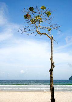 slanted @ maracas beach, trinidad   December 2007