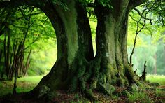 Green Trees Wallpapers - Full HD wallpaper search - page 2