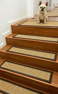 Stair Treads For Dogs. My Dogs Would So Thank Me For This. No More