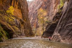 Epic Hikes of Zion - Angels Landing and The Narrows — Travel Is Beautiful Hiking The Narrows, Before Us, Angel, Travel, Beautiful, Viajes, Destinations, Traveling, Trips