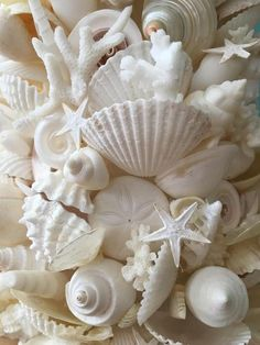 Coastal decor - beach themed decorations for house. The best in coastal interior decorating suggestions for having a lifestyle beside the sea! Orange Aesthetic, Beach Aesthetic, Coastal Christmas, Purple Christmas, Christmas Decor, Make Ready, Shell Art, Shades Of White, Christmas Tree Decorations