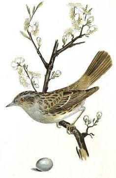 Resultado de imagem para vintage birds