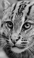 Download free mobile wallpapers for tablet or phone. Download free backgrounds, images, mobile wallpapers: Cats,Animals, 35188.
