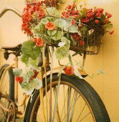 cyckel med blommor