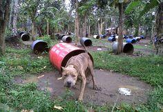 IDK what this says but, it doesn't look good.  Criadero de pelos de pelea en Mexico. Más de 400 perros que vivían en condiciones lamentables y se usan después en apuestas.