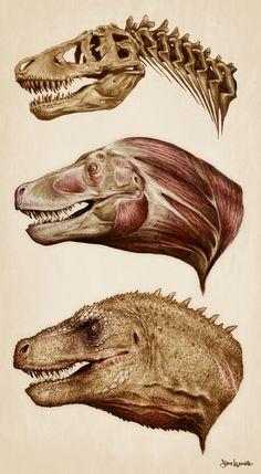 Tyrannosaurus head anatomy - Steven Womack