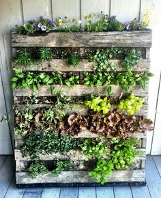 Indoor Vertical Gardens - Right now you are 7 easy steps away from a fantastic DIY pallet garden! Small spaces can go green and reduce how Cool! Make your rooms come alive with a vertical garden Herb Garden Pallet, Pallets Garden, Pallet Gardening, Pallet Planters, Organic Gardening, Planter Ideas, Urban Gardening, Vegetable Gardening, Vertical Pallet Garden