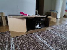 箱入り猫。
