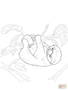 baby-sloth-coloring-page.jpg 1,200×1,600 pixels