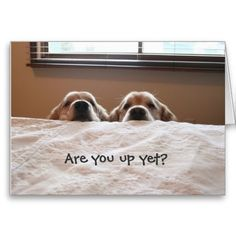 """Are You Up Yet?"" Golden Retriever Greeting Card -- SOLD to a customer in California! A familiar sight for many dog owners! This greeting card features two adorable golden retriever dogs peering over the side of the bed, waiting for their human to get up! Rottweiler, Cute Puppies, Cute Dogs, Dogs And Puppies, Doggies, Funny Dogs, Funny Animals, Cute Animals, Golden Retrievers"