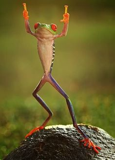 High-fiving frog (well, High-two-ing) times Two!!  Awesome photo---fun, fun, funny!