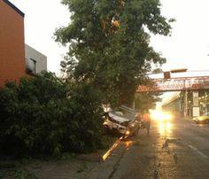 Precaución al circular por avenida Colón y calle Fresno dirección sur norte, antes de túnel, camioneta se sube a banqueta, derribó un poste y un árbol. Reportero Ciudadano: Mauricio
