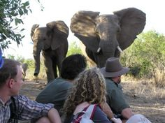 Walking Safaris in South Africa Game reserves Go Game, Always A Bridesmaid, Adventure Holiday, Rhinos, Adventure Activities, Game Reserve, African Safari, Fun Ideas, Elephants