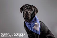 Congo and the Shocking blue Dots Vichy Civic Dog® scarf, square pocket. http://civicdog.com/product/tuli-pañuelo-civic-dog-dots-azul-shocking