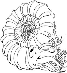 Collection of free fossil coloring pages fossils for Fossil coloring pages