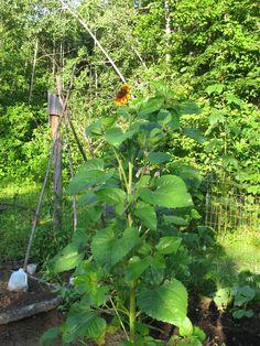 Gardening Like A Pro: Organic Gardening Tips
