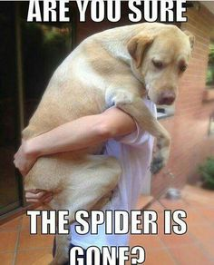 The Spider Is Gone #lol #funny #RT #fun #comedy #wtf