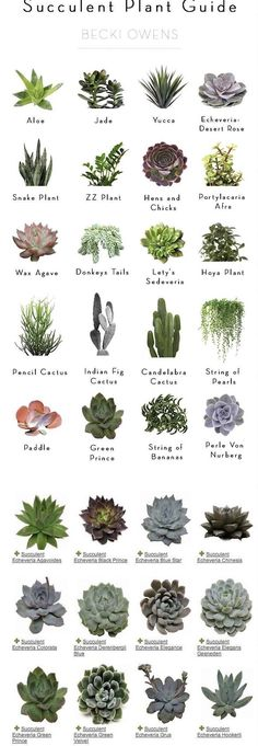 Newest Absolutely Free cactus plants names Tips Plants and cacti would be the g., Newest Absolutely Free cactus plants names Tips Plants and cacti would be the g…, #